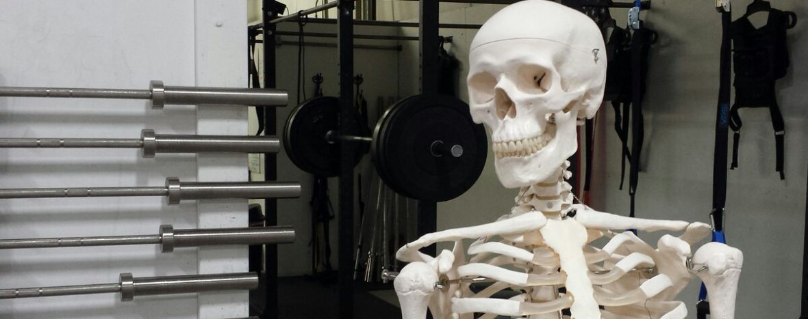 Gym Skeleton